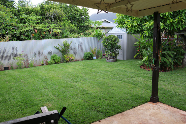 After just a few days, the new lawn is looking lush and healthy.