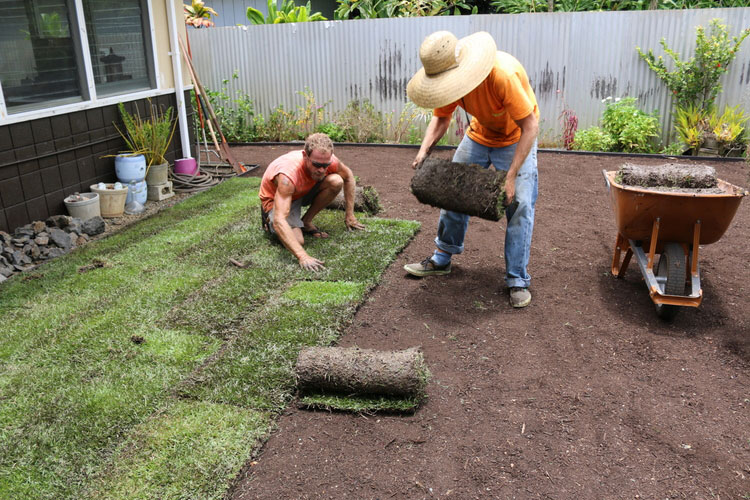 carefully inspect each sod for quality