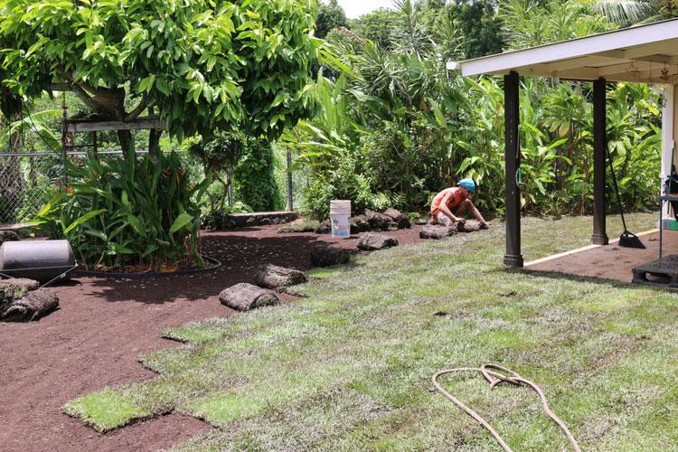 Sod Grass Installation