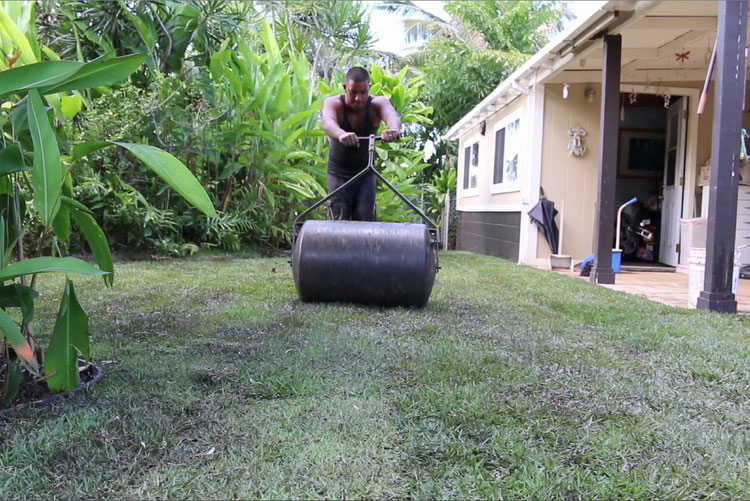 Use roller on new installed sod grass to make it smooth and even.