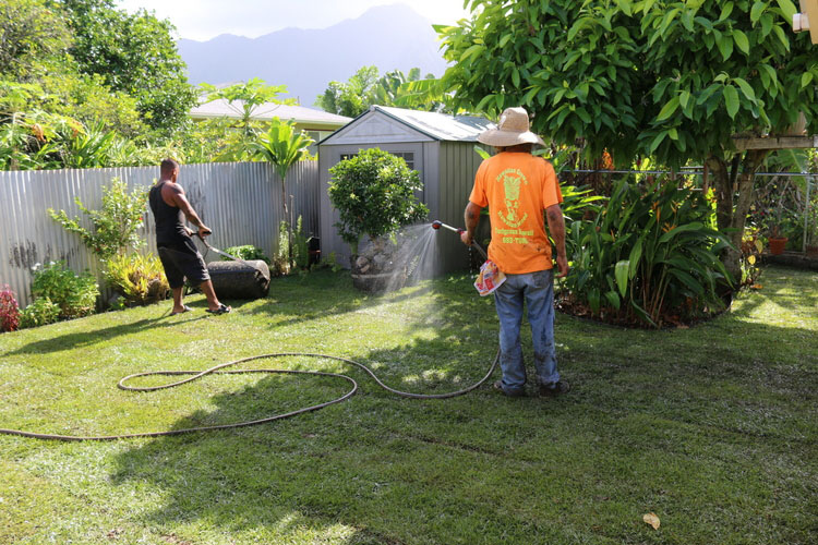 Water two to three times daily to ensure a healthy new lawn.